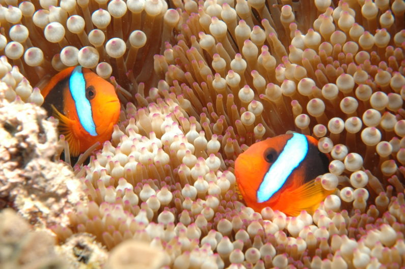 The world's largest coral reef