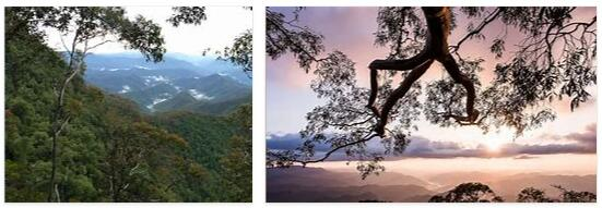 Gondwana Rainforests of Australia (World Heritage)